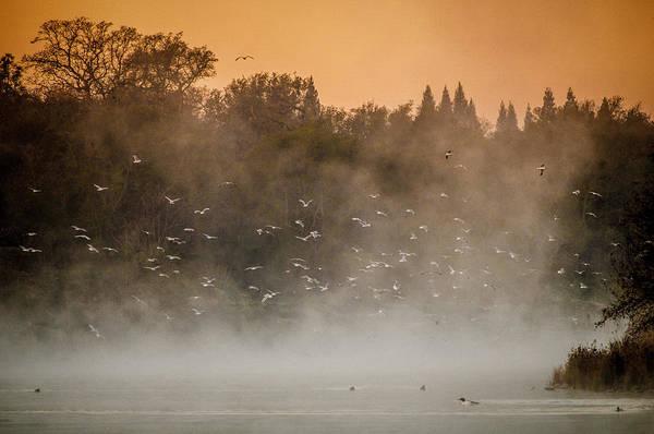 Birds And The Fog  Art Print