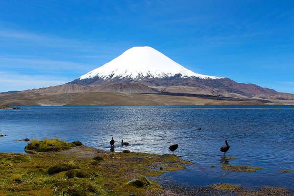 Photograph - Birds At Lake Chungara Chile by Kurt Van Wagner