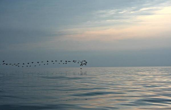 Birds At Sunset In Sister Bay Art Print