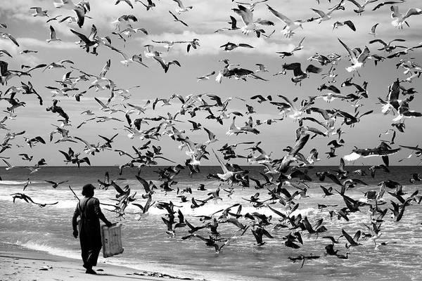 Coastal Bird Photograph - Birds Birds by Liesbeth Van Der