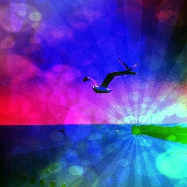 Edit Photograph - Birds by Chris Drake