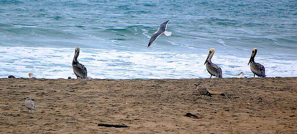 Photograph - Birds Day At The Beach by AJ  Schibig