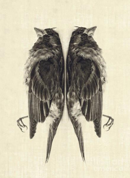 Bird Pair Photograph - Mirror Mirror by Edward Fielding
