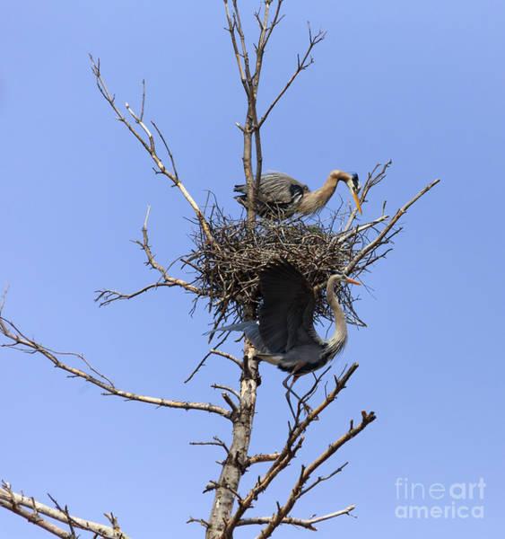 Photograph - Birds Eye View by Mary Lou Chmura