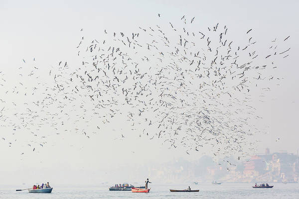 Oar Photograph - Birds Flying Over Boats On Water by Pixelchrome Inc