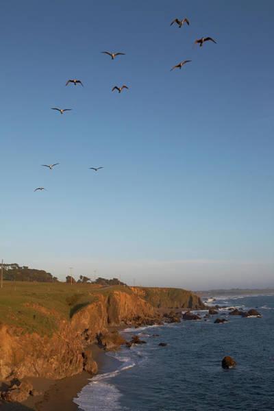 Jason Day Photograph - Birds Flying Over Rocky Sonoma Coastline by Jason Todd