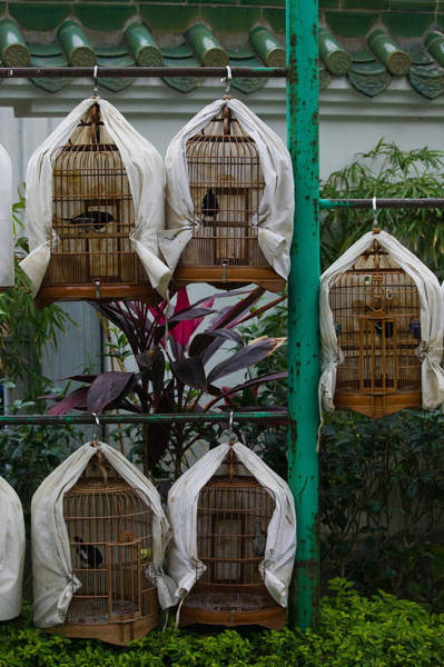 Kowloon Photograph - Birds In Cages For Sale At A Bird by Panoramic Images