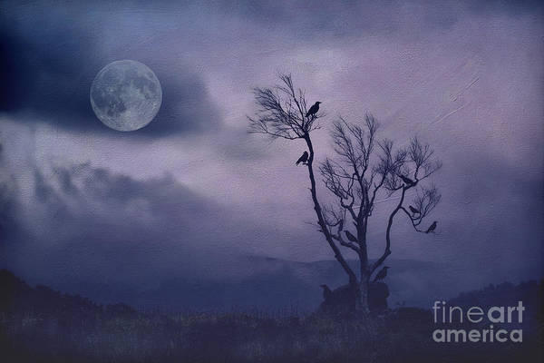 Wall Art - Photograph - Birds In The Night by Darren Fisher