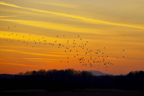 Photograph - Birds In The Sunset by Ivan Slosar