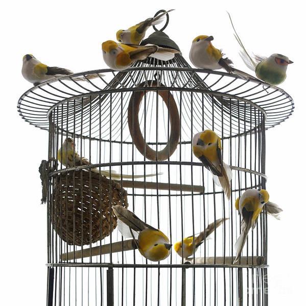 Away From It All Wall Art - Photograph - Birds Inside And Outside A Cage by Bernard Jaubert