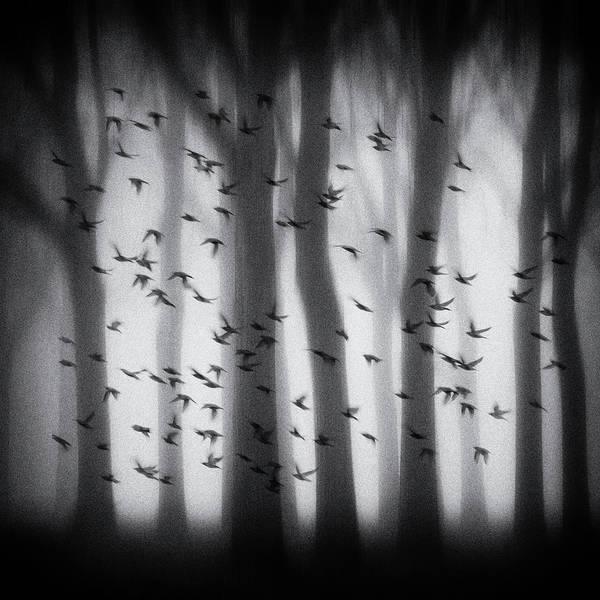 Mysterious Wall Art - Photograph - Birds by Jacqueline Van Bijnen