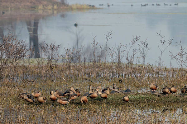 Wall Art - Photograph - Birds Keoladeo Ghana National Park by Tom Norring