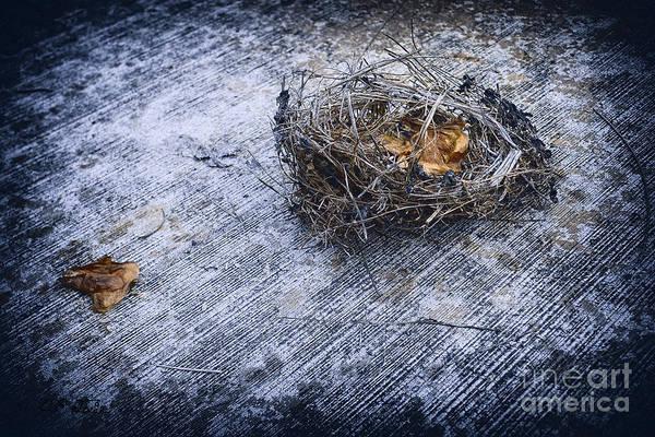 Empty Nest Wall Art - Digital Art - Birds Nest by Charles Davis