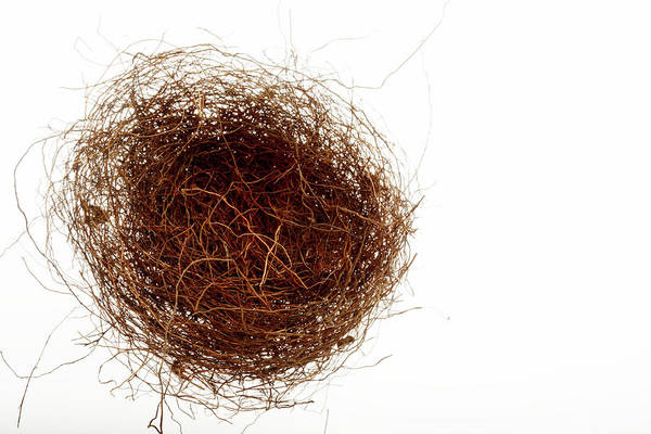 Empty Nest Wall Art - Photograph - Bird's Nest by Mauro Fermariello/science Photo Library