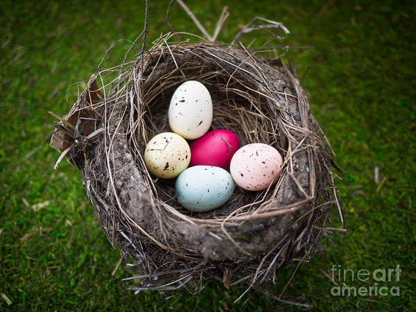Birds Eggs Photograph - Bird's Nest With Easter Eggs by Edward Fielding