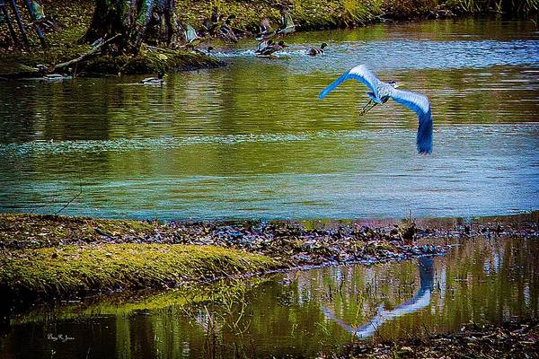 Photograph - Blue Heron - Birds Of A Feather by Barry Jones