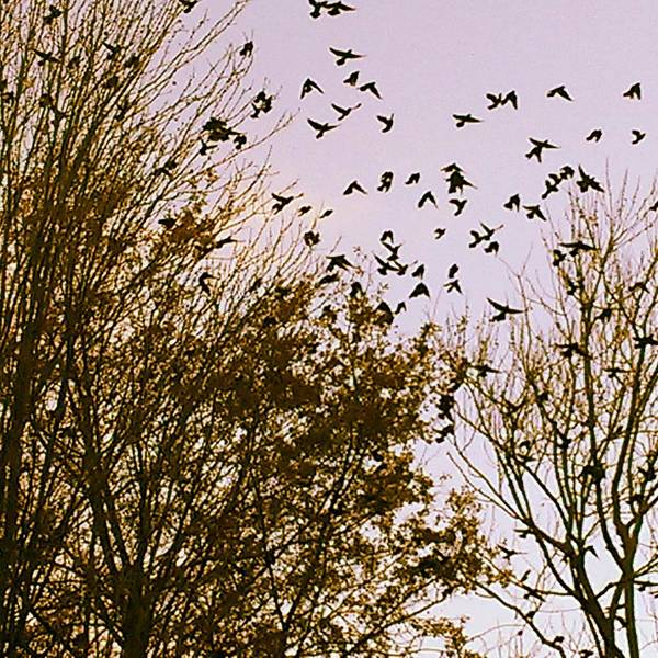 Photograph - Birds Of A Feather Flock Together by Thomasina Durkay
