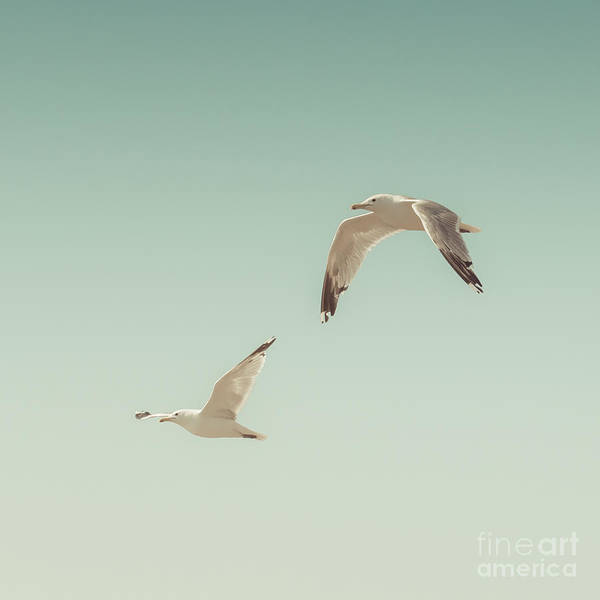 Water Birds Photograph - Birds Of A Feather by Lucid Mood