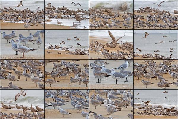 Wall Art - Photograph - Birds Of Many Feathers by Betsy Knapp