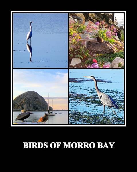 Photograph - Birds Of Morro Bay by AJ  Schibig