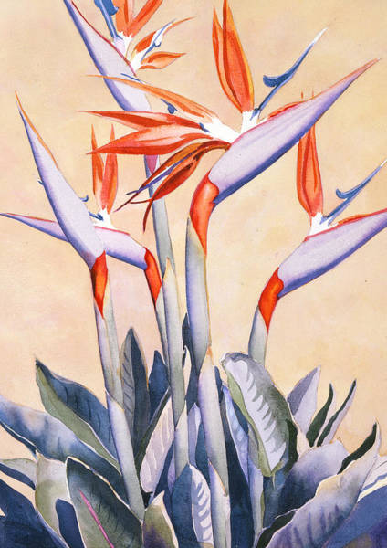 Tropical Bird Painting - Birds Of Paradise by Mary Helmreich