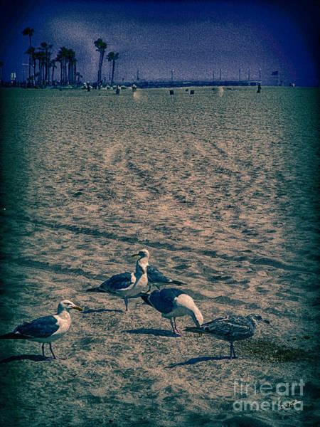 Cultivation Digital Art - Birds Of Venice Beach by Charles Davis