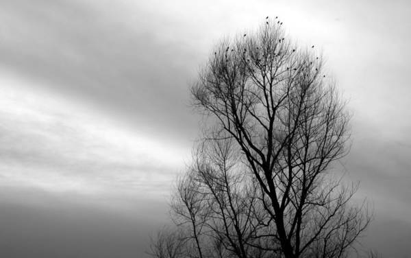 Photograph - Birds Of Winter II by AJ  Schibig