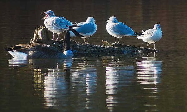 Photograph - Birds On A Log by Steve Somerville