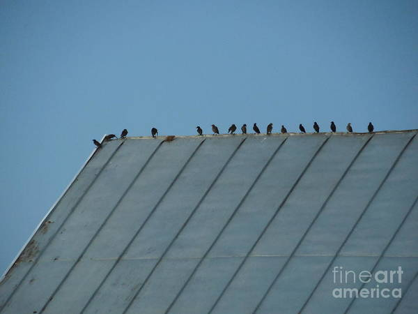 Rowena Photograph - Birds On A Tin Roof by Rowena Throckmorton