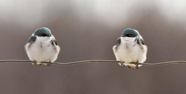 Wire Photograph - Birds On A Wire by Lucie Gagnon