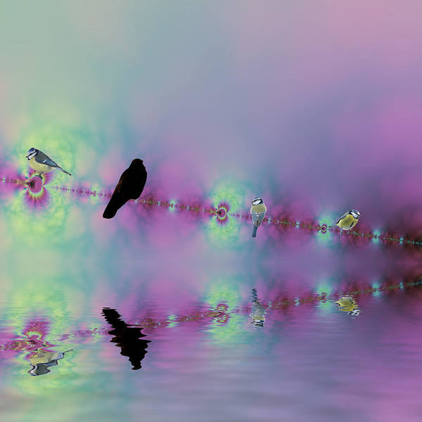 Birds On A Wire Reflected Art Print