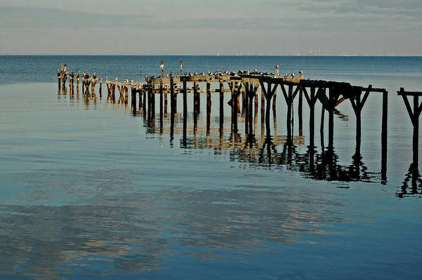 Alabama Painting - Birds On Old Dock On The Bay by Michael Thomas