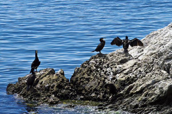 Photograph - Birds On Rocks by Ivan Slosar