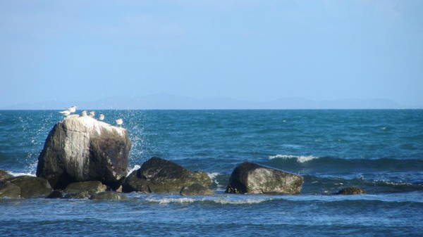 Photograph - Birds On Rocks With Waves by Anita Burgermeister