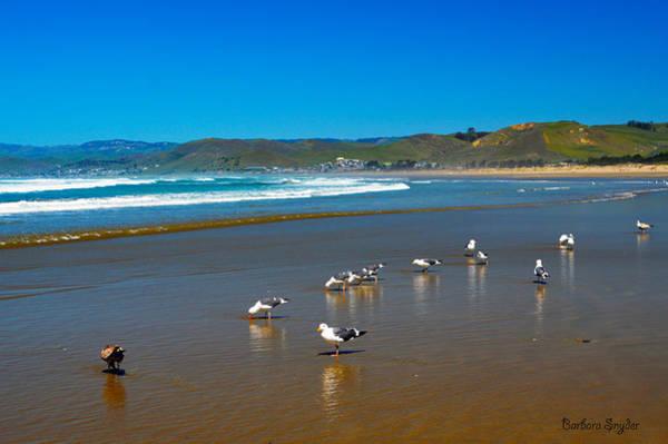 Morro Bay Digital Art - Birds On The Beach Morro Bay California by Barbara Snyder