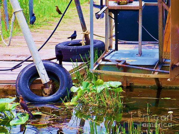 Airboat Photograph - Birds On The Dock by Chuck  Hicks