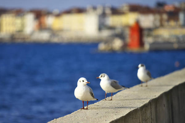 Photograph - Birds On The Wall by Ivan Slosar