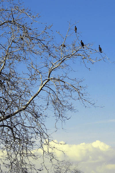 Photograph - Birds On Tree by Ben and Raisa Gertsberg