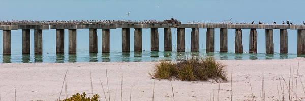 Photograph - Birds Only Pier by Ed Gleichman