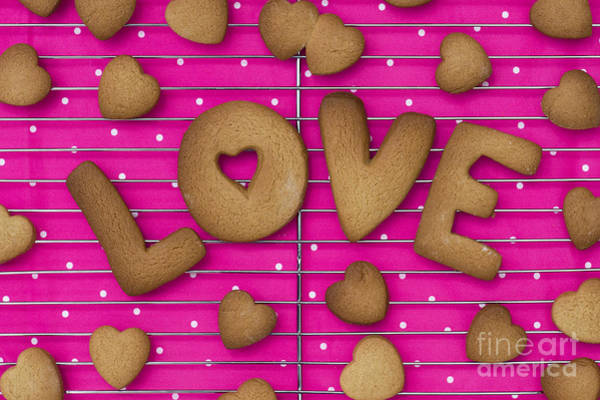 Pink Photograph - Biscuit Love by Tim Gainey