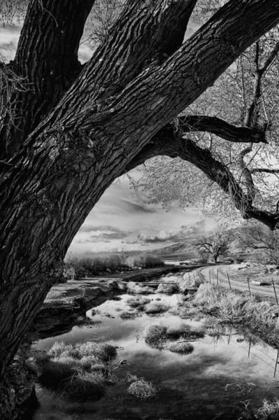 Photograph - Bishop Canals by Cat Connor