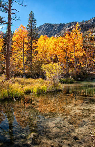 Orange Cat Photograph - Bishop Creek - Fall by Cat Connor