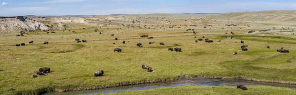 Photograph - Bison Herd by D Robert Franz