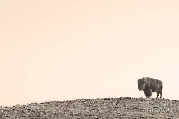 Photograph - Bison Hill  by James BO Insogna