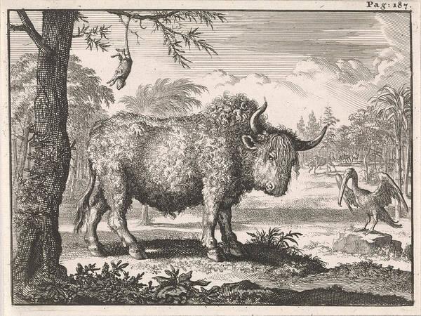 Hoof Drawing - Bison, Opposum And A Pelican In An Exotic Landscape by Caspar Luyken And Willem Broedelet