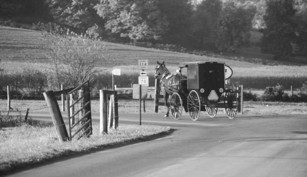 Berlin Ohio Photograph - Black And White Amish Horse And Buggy by Dan Sproul