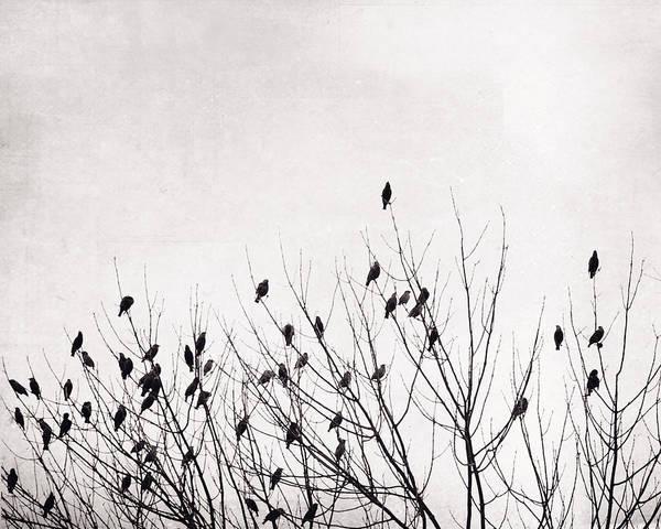 Wall Art - Photograph - Black And White Birds by Carolyn Cochrane