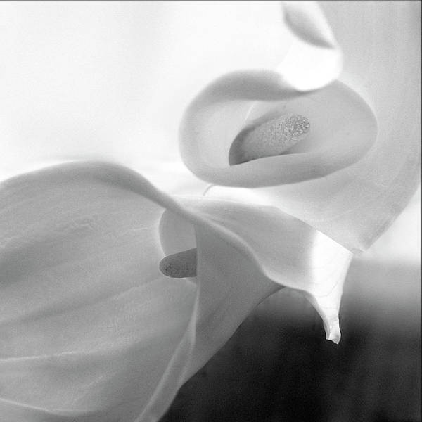 Anna Photograph - Black And White Calla by Anna Miller