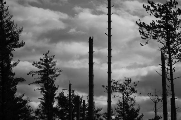 Photograph - Black And White Forest 3 by Staci Bigelow