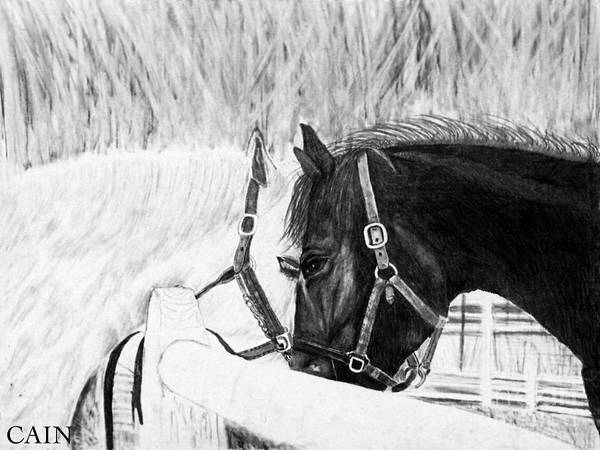 11x14 Painting - Black And White Horses Art Print by William Cain